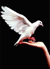 مدیریت فرهنگ صلح